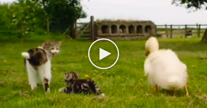 They Couldn't Find The Ducklings, Then They Made A Surprising Discovery!  NOBODY Expected THIS…
