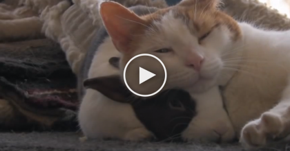 This Cute Kitty Has A Best Friend, But They Love Each other In The Sweetest Way… You'll LOVE this!