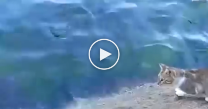 This Homeless Street Cat Was Hungry, But Then It Saw Something… WATCH What Happens Next!