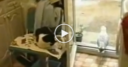 This Kitty Watches In Horror As His Food Is Stolen By An UNEXPECTED Thief!  WATCH His Reaction…