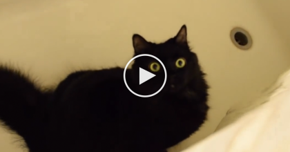 Their Cat Wanted To Kill Them, So They Made A Video… What They Found Isn't What You Think!