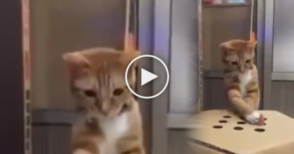 (Video) This Game Is The MOST Ingenious Way To Guarantee Your Cat Fun For Hours! I LOVE this…
