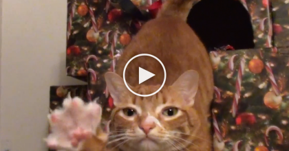 Their Cats Ruined Their Christmas Tree, So They Made A Cat-Proof Christmas Tree! WATCH