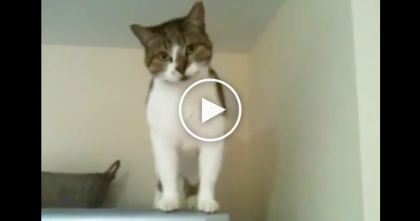 Kitty Likes To Climb Everywhere, But They Sure Didn't Expect THIS To Happen… Oh My?!