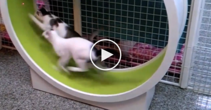 They Needed Some Exercise, So Watch What They Got The Cats, It's Just GENIUS.
