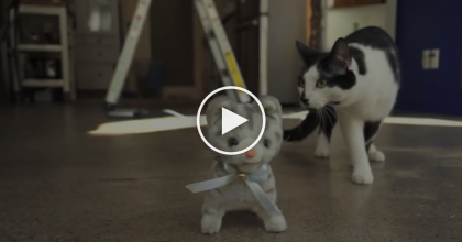 They Got Their Cat A New Toy, But They NEVER Expected The Cat Would Treat It THIS Way!…