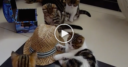 WATCH What Happens When Their Kittens Discover A Hat For The FIRST TIME! So Precious…