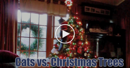 We Still Love Our Cats No Matter What, But WATCH These Cats Unleash Their Fury On Christmas Trees!