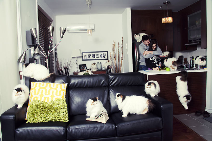She Noticed Cats Running Everywhere, So She Started Taking Pictures... The Result? Amazing4