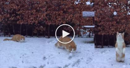 He Walked Out To The Garden, Then He Threw His Cat A Snowball… WATCH What He Recorded!