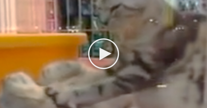This Cat Knows His Friend Needs Some Love, Now Watch What He's Doing… Ahhhhhh!!