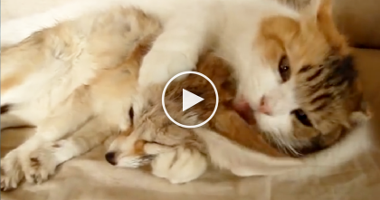 Kitty Makes A New Friend…But Can't Stop Giving Him love, WATCH The Adorableness…
