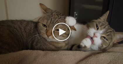 When They Wake Up Together, THIS Is What Happens, Just Watch And See… Awwww!!