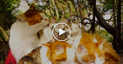 This Adorable Family Snuggles Together And It's A Fluffy Ball Of Happiness! You MUST WATCH This!