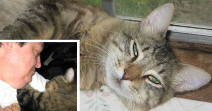 They Took Him Back To The Shelter, Left In Tears…But A Few Days Later? You're Heart Will MELT