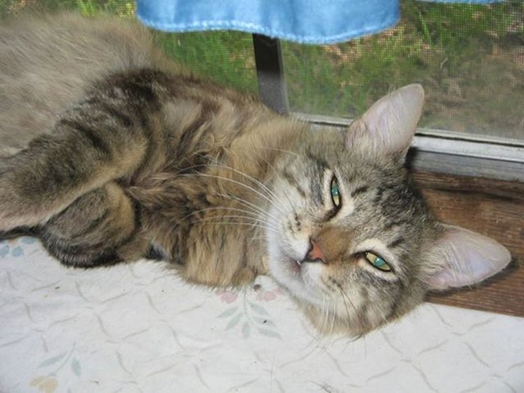 Cat Breaks Out of Shelter to Return to His Rescuer