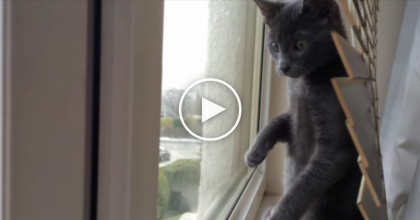 This Kitten Discovers 'Snow' In The Sky For The VERY First Time, But His Reaction Is Just PRICELESS