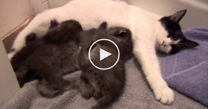 I Thought These Were Kittens, But Then I Took A Closer Look…What They Really Are? AMAZING