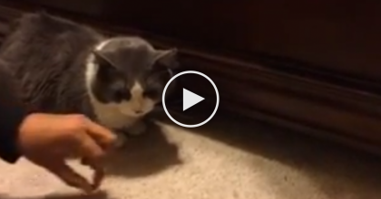 They Try giving This Cat Some Treats, But There's A Thief Under The Bed! Must WATCH… LOL!