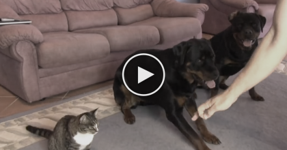 These Dogs Sit At Their Owners Command, But When It Comes To The Cat? I CAN'T Believe It
