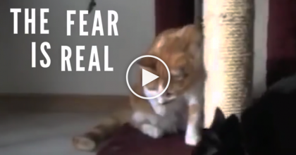 These Cats Discover The Dreaded 'Banana', But Their Reactions Are HILARIOUS, Must Watch
