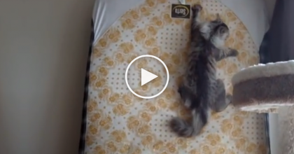 Most Cats Don't Like Playing Fetch, But This Cat? He's A Different Story…You Gotta See Him!