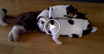 These Puppies Discover The 'Cat' For The First Time, The Results? *Pawsitively ADORABLE*