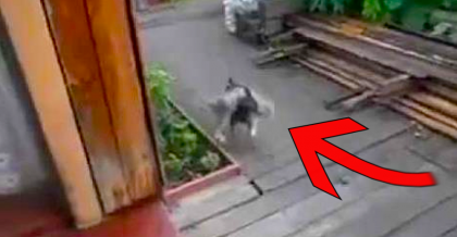 She Said Something To The Dog, Then He Put His Head Under The Cat… I CAN'T Believe This!!