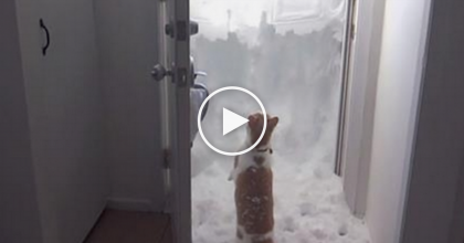 Their Cat Wanted To Go Outside, But What Does He Do Next? I CAN'T Believe This… OMG!