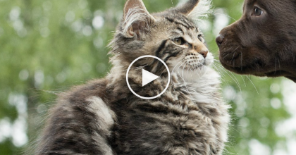 These Puppies Meet Cats For The First Time, But Their Reactions? You Gotta See! *PRICELESS*