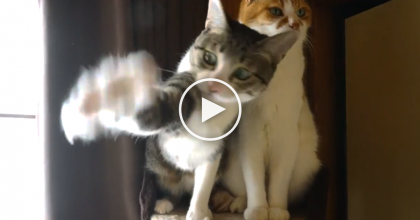 They Got Their Cats A Toy…One Is Very Playful And Excited, But The Other One? You Gotta See THIS