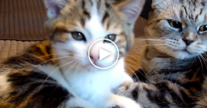 This Kitten And Cat Are In The Mood To Love Each Other, WATCH This!  *Cuteness-Overload