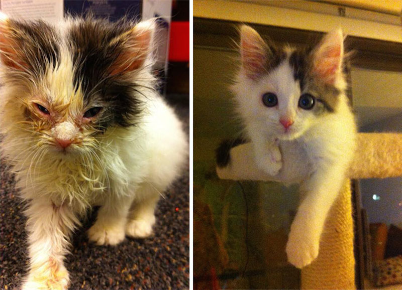Before-and-after-cat-rescue-pictures-1