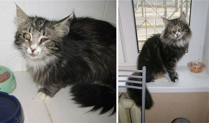 Before-and-after-cat-rescue-pictures-14