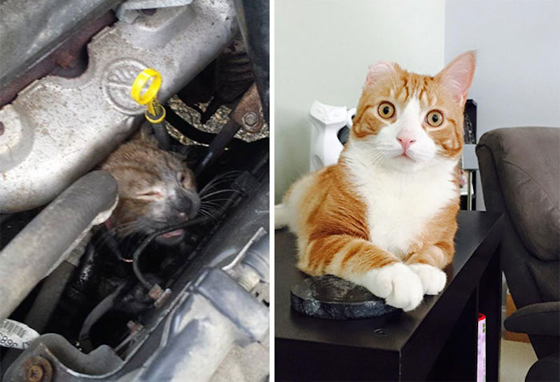 Before-and-after-cat-rescue-pictures-19