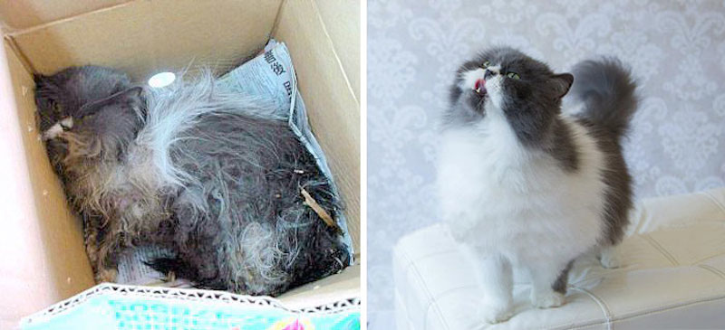 Before-and-after-cat-rescue-pictures-4