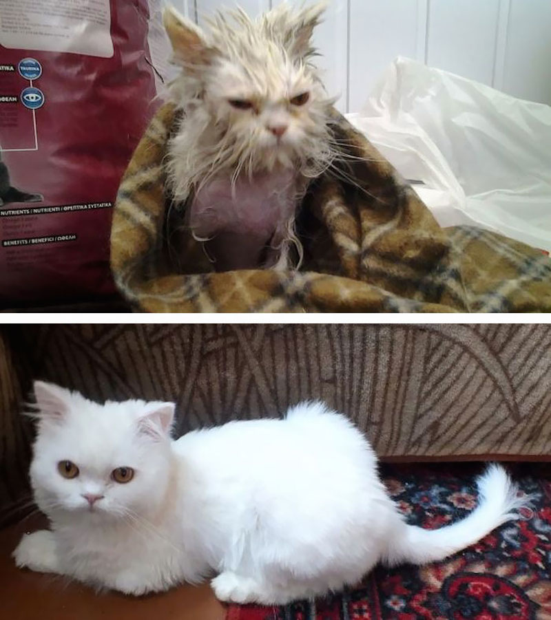 Before-and-after-cat-rescue-pictures-7