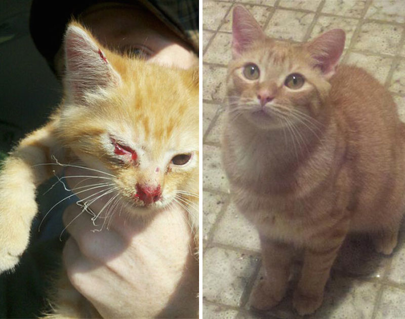 Before-and-after-cat-rescue-pictures-8