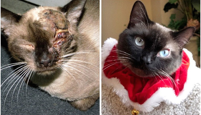Before-and-after-cat-rescue-pictures-9