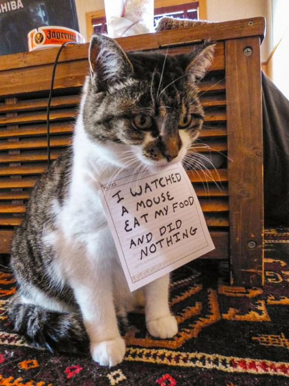 Pictures-Of-Cats-Confessing-To-Crimes-1