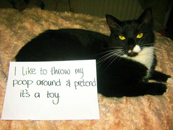 Pictures-Of-Cats-Confessing-To-Crimes-16