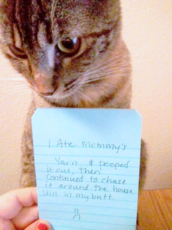 Pictures-Of-Cats-Confessing-To-Crimes-18