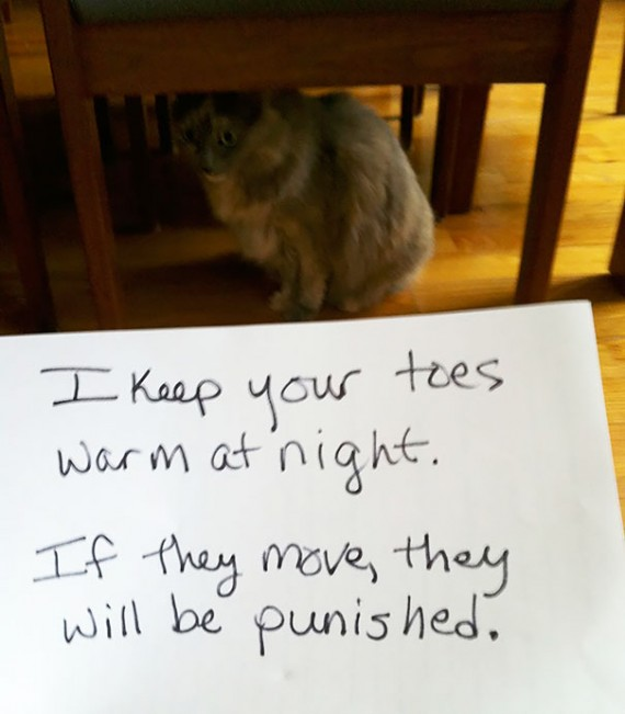 Pictures-Of-Cats-Confessing-To-Crimes-19