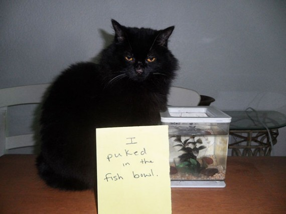 Pictures-Of-Cats-Confessing-To-Crimes-5