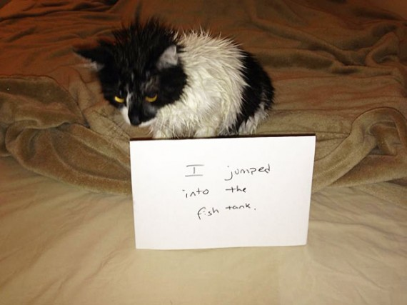 Pictures-Of-Cats-Confessing-To-Crimes-7