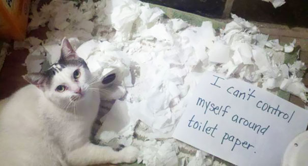 Pictures-Of-Cats-Confessing-To-Crimes