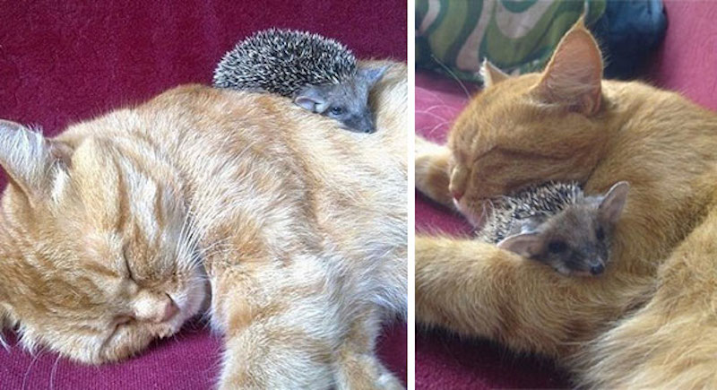 cats-are-the-best-snugglers-in-the-world-11