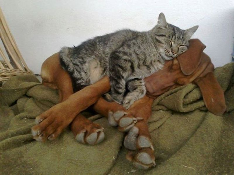 cats-are-the-best-snugglers-in-the-world-5