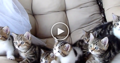 These Cats Started Moving Back And Forth, But Then The Music Started Playing, Oh My… WATCH