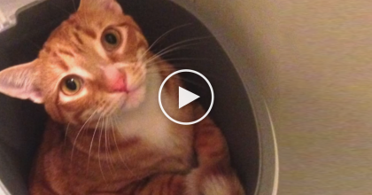 Cole and Marmalade's Thoughts Have Been Revealed And The Result Is Simply ADORABLE!